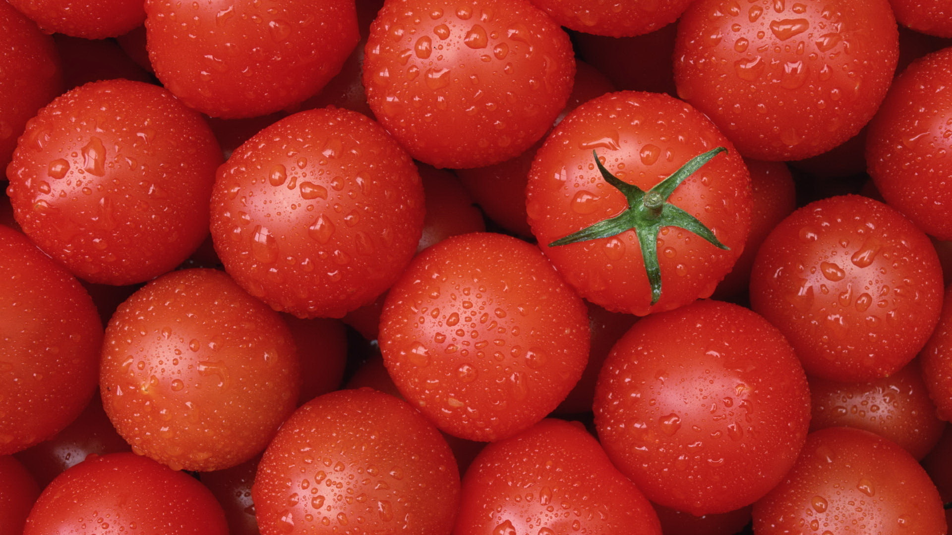 suzt-tomatoes-2